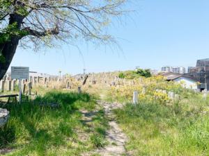 林墓地(明石市林)のお墓の写真